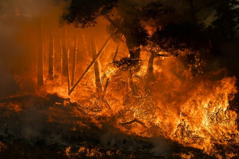 Powerful winds fan flames as 'historic' California blaze spreads