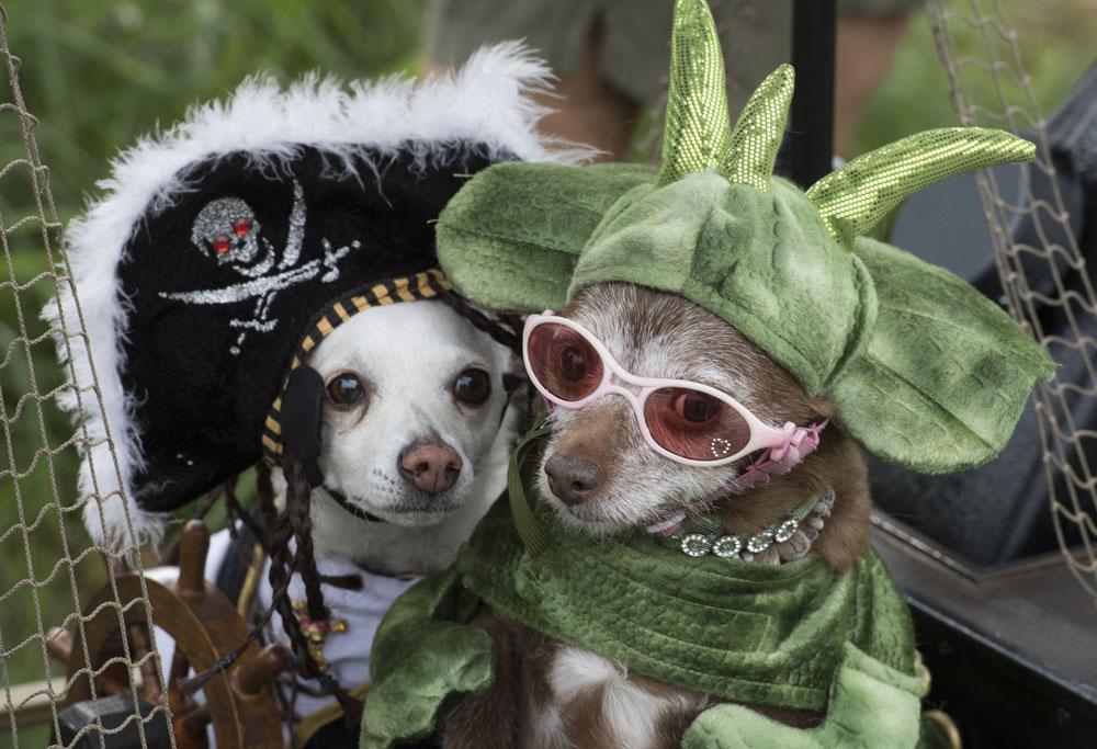 Pups rock Haute Dog Howl'oween parade