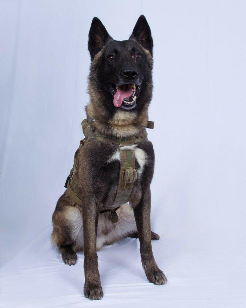 Trump tweets photo of military dog wounded in Baghdadi raid