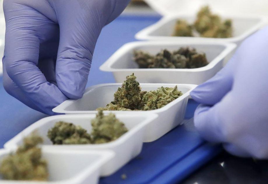 marijuana samples (ap).jpg