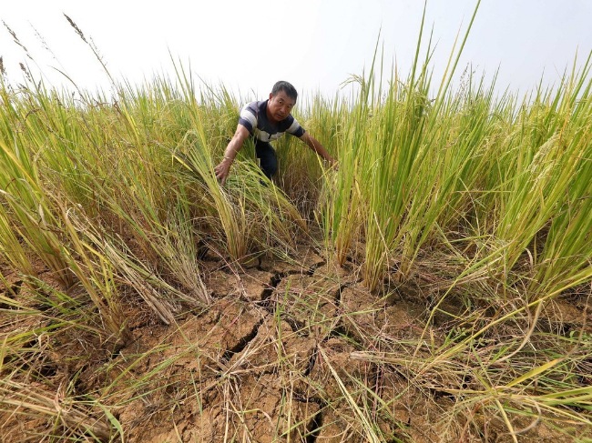 East China province invests heavily in drought relief
