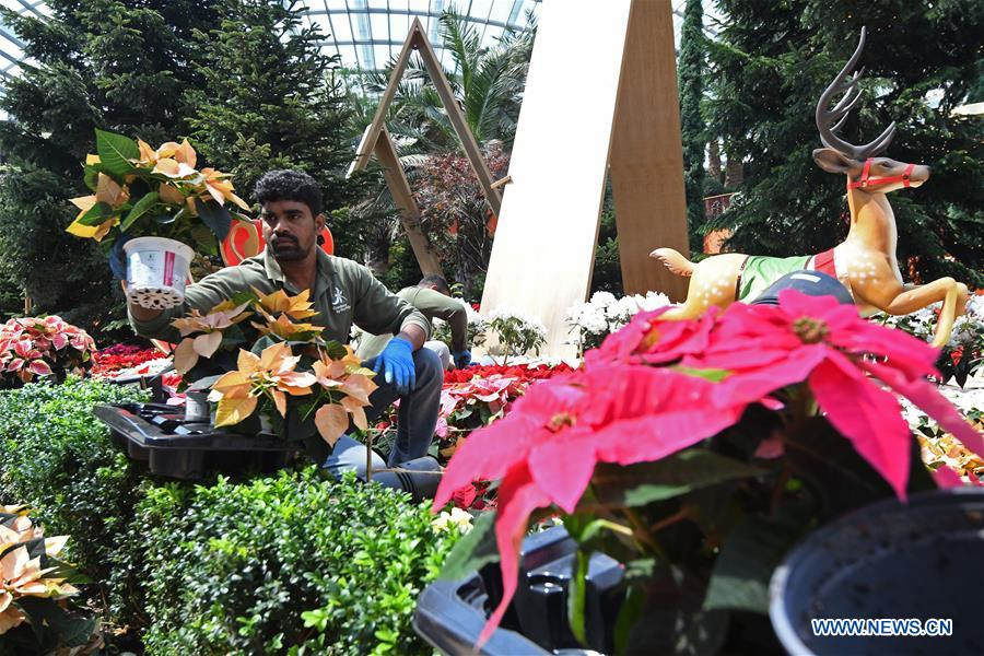 """Workers prepare nordic-themed """"Poinsettia Wishes"""" Christmas installation in Singapore"""