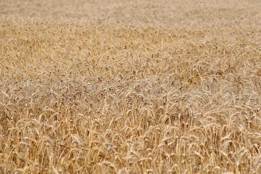 EU vows 'zero tolerance' after reported farm budget abuse