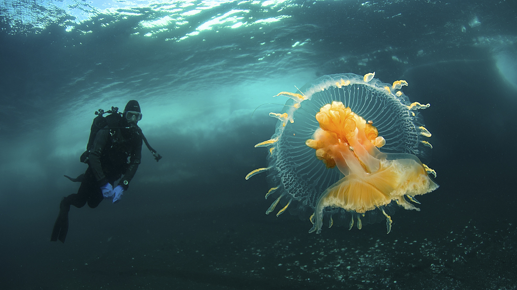 Ten things you might not know about jellyfish