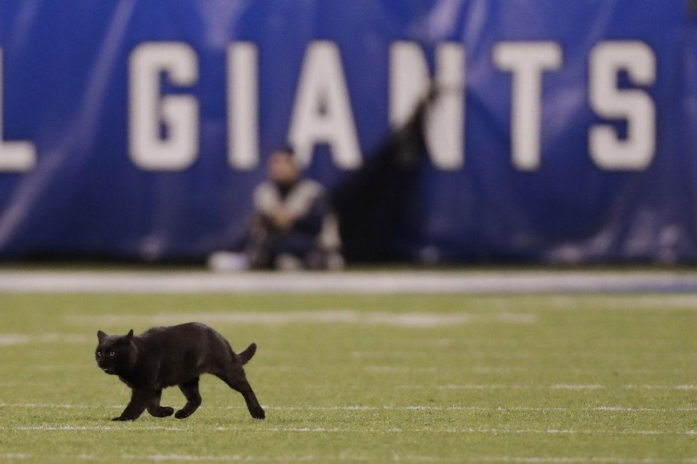 Black cat scampers on field at Cowboys-Giants game