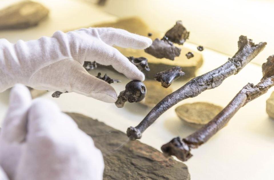 ape bones (ap).jpg
