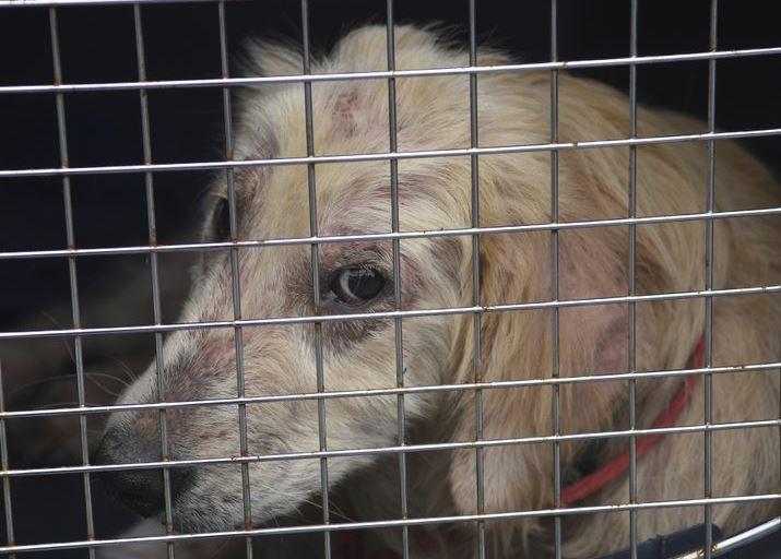 animal cruelty (ap).jpg