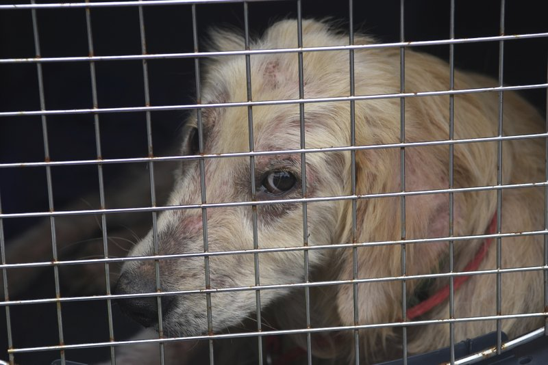 US Congress approves bill expanding animal cruelty law