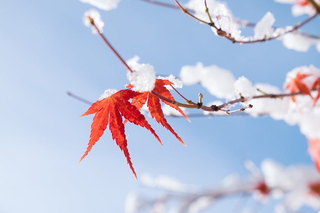 24 Solar Terms: 8 things you may not know about Start of Winter