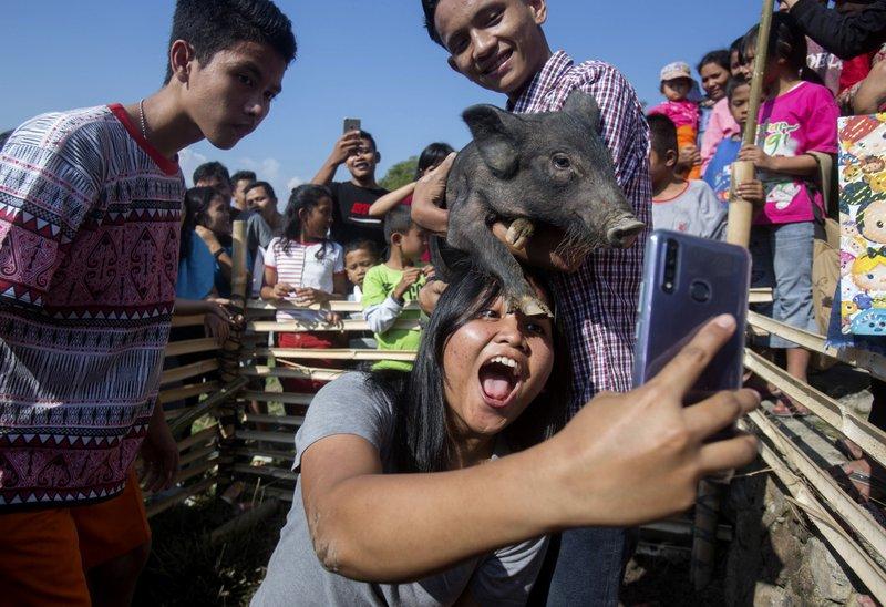 Swine fever: New Indonesian festival celebrates pigs