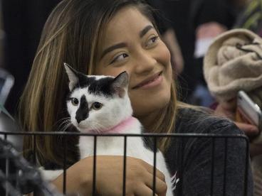 Mega Adoption event held in Texas, U.S.