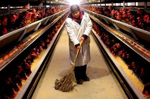 Poultry inspections progress