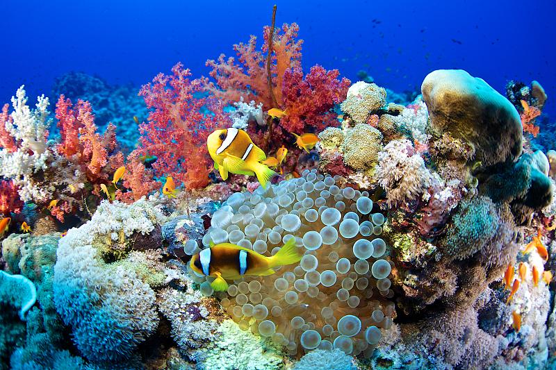 UN agency calls preserving Africa's marine ecosystem