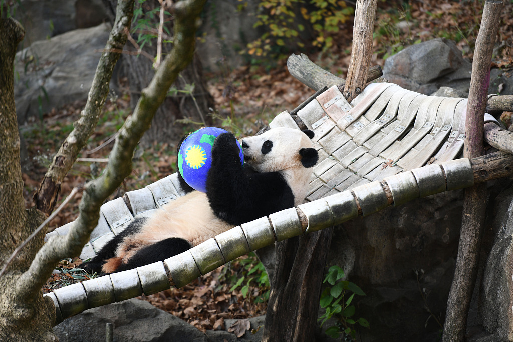 Bei Bei's farewell party epitomizes love for giant pandas, China-US friendship