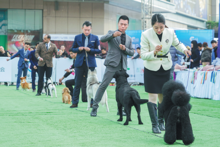 dog show2.png