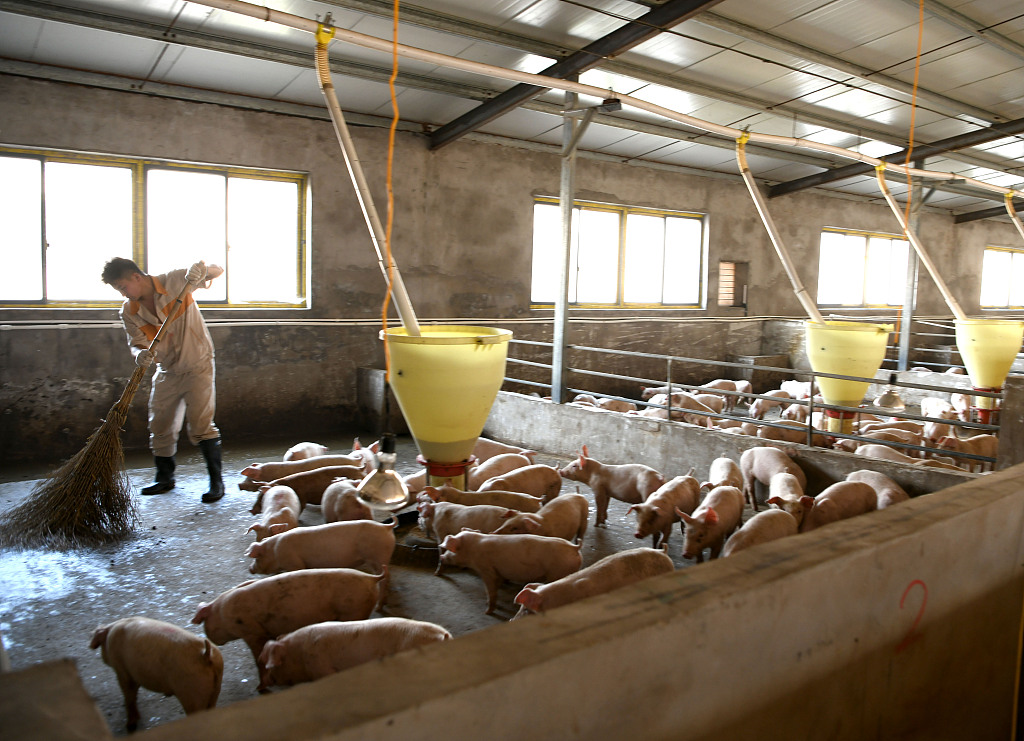 China's pig farmers confident in boosting hog production