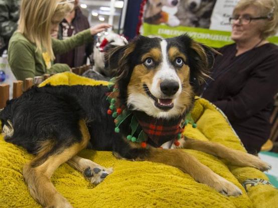 2019 Toronto Christmas Pet Show held in Canada