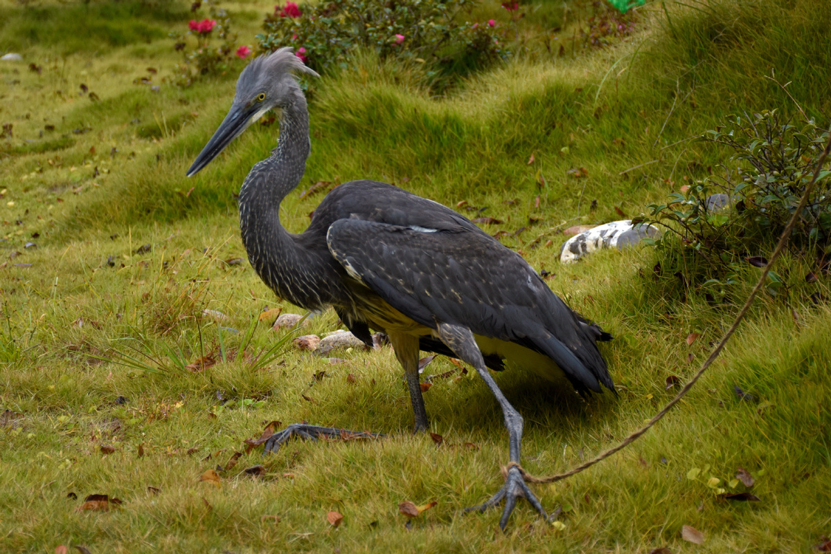 Critically endangered bird spotted in SW China
