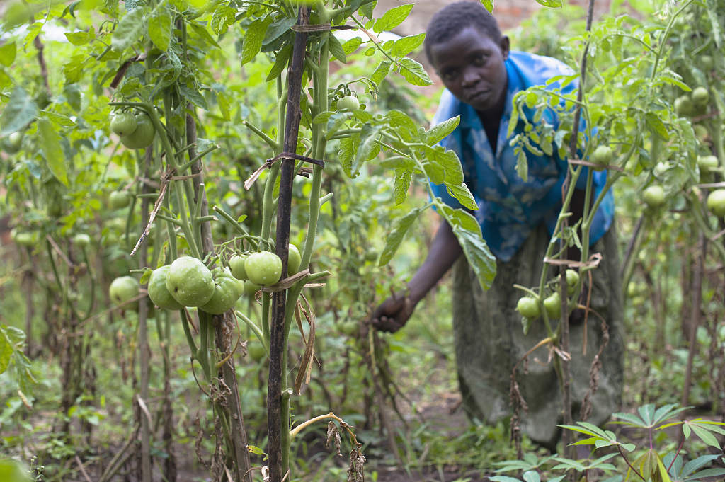Uganda signs 2.4 mln USD China-funded agriculture project