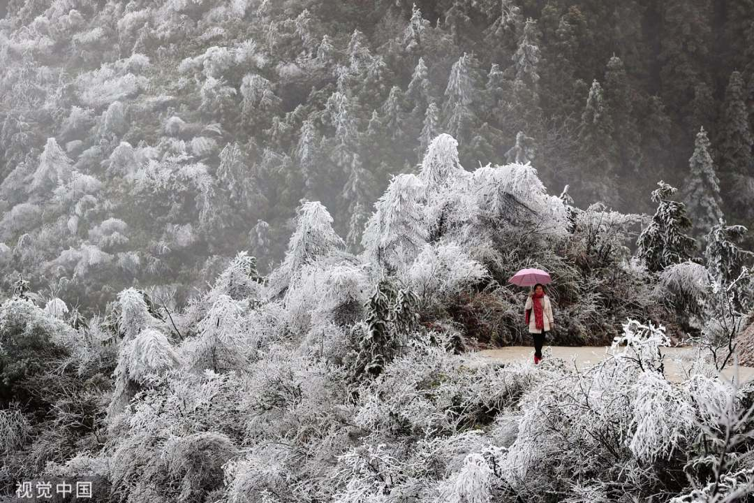 Stunning rime appears in SW China's Qianjiang National Forest Park