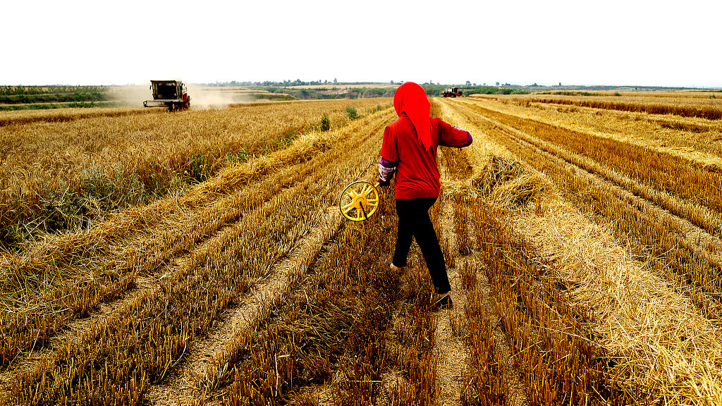 China issues guideline to keep land contracting practices 'unchanged'