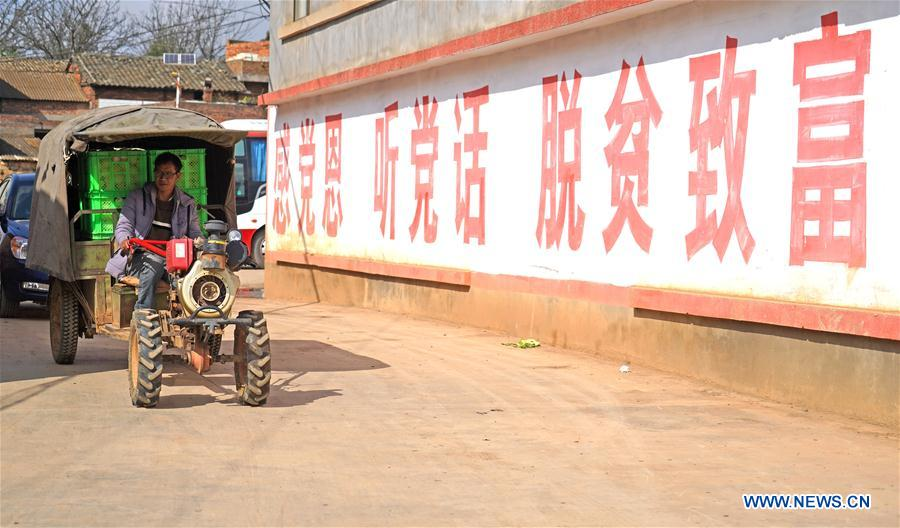 Pepino melon planting industry helps villagers get rid of poverty in SW China's Yunnan