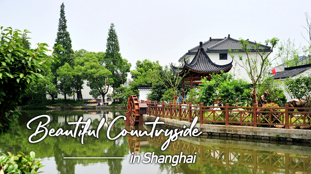 Finding the beautiful countryside in Shanghai