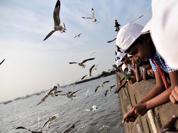 School children feed seagulls in Mumbai, India