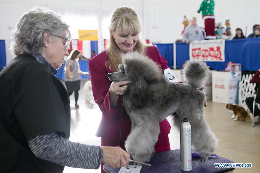 In pics: dog show held in Dallas, Texas