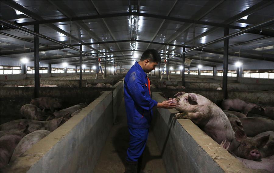 pork-Xinhua.jpeg
