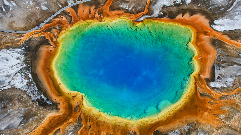 What microbe lives inside a boiling hot spring?