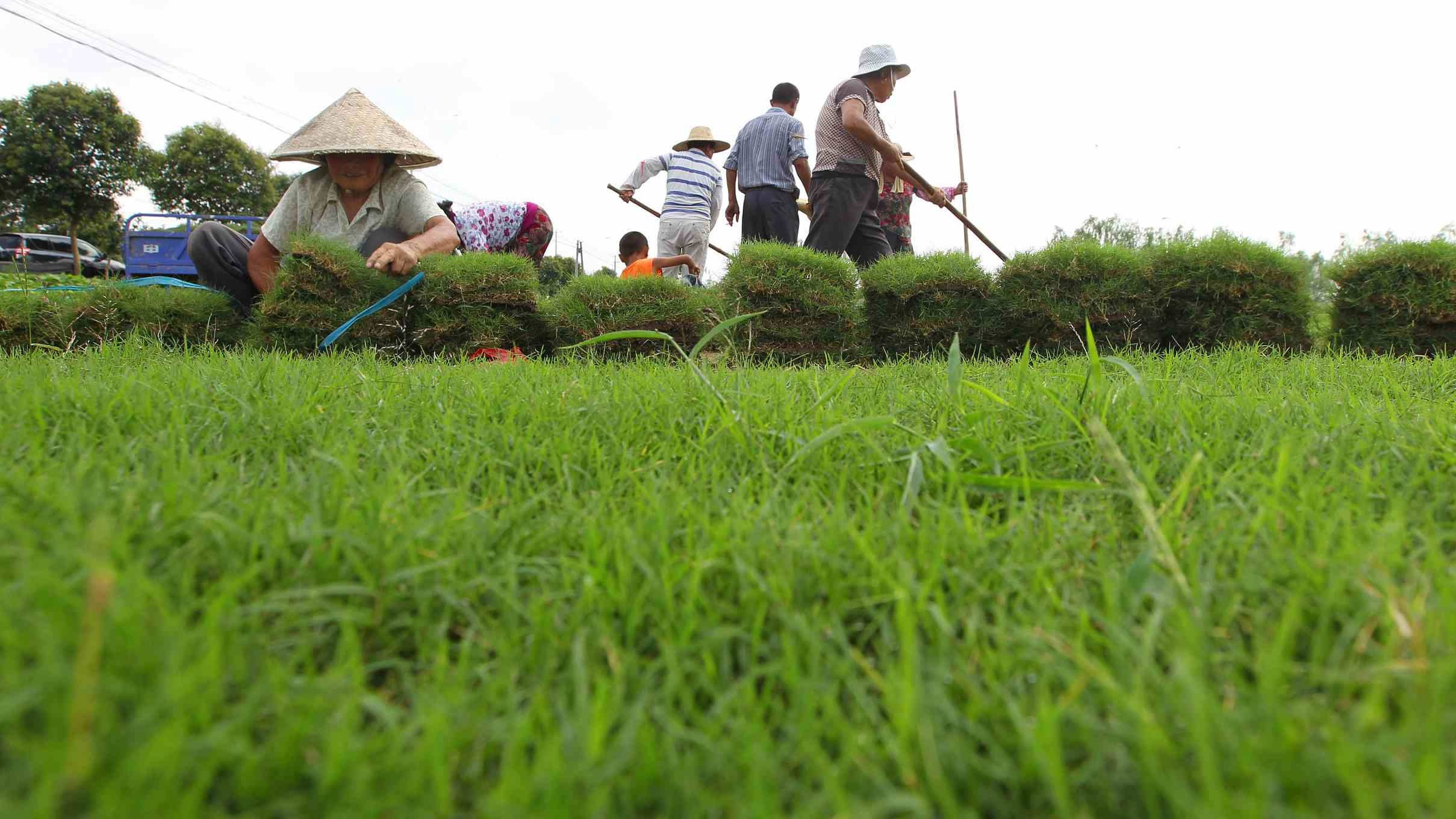 China calls for int'l cooperation to promote green agricultural development