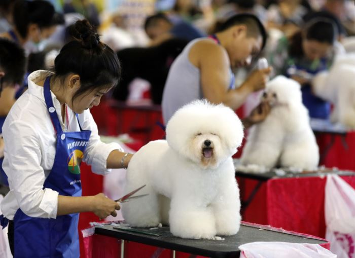 Chinese spend over $28 bln on cats and dogs in 2019: report