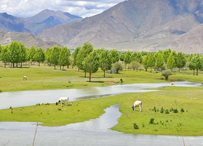 Besides water, Tibet can give India green lessons