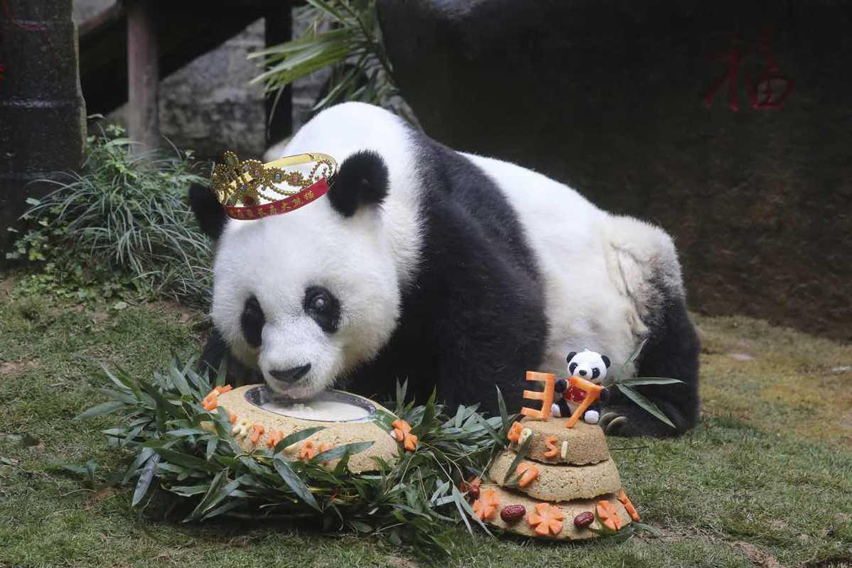 Panda's story promotes peace at 2019 Basi Culture Forum