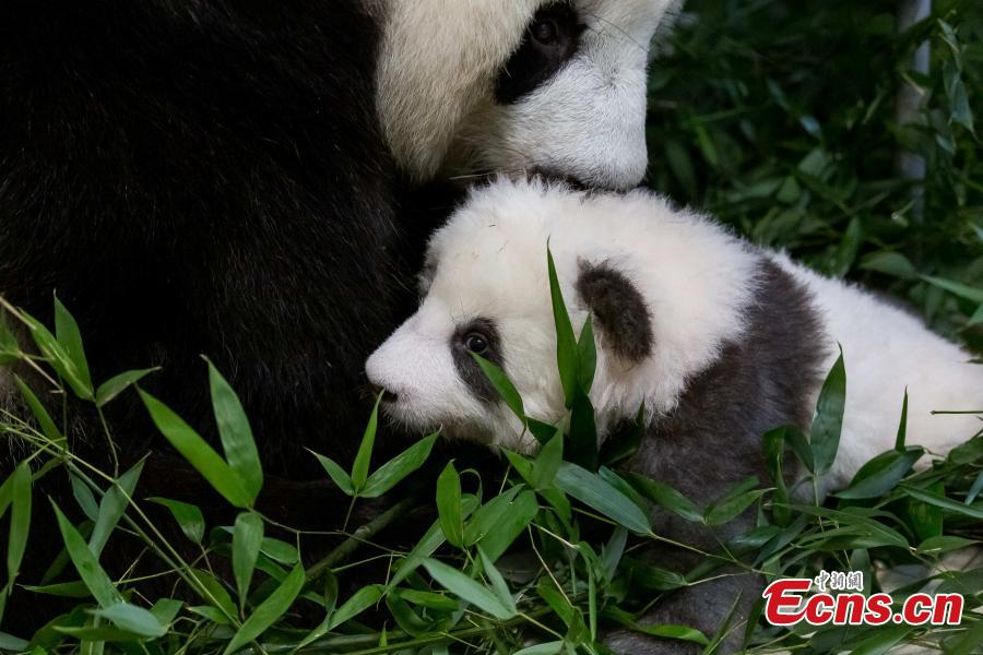 Zoo Berlin nominated for Panda Global Awards