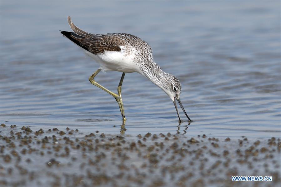 In pics: birds seen on beach of Kuwait City