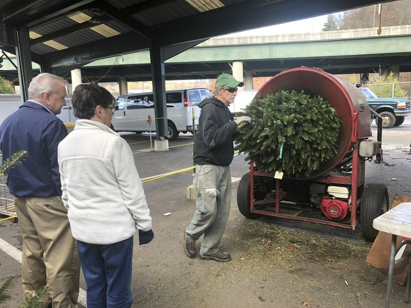 'Shop early': US Christmas tree supplies tight, prices up