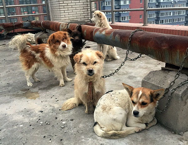 Ministry sees need to stop animal cruelty