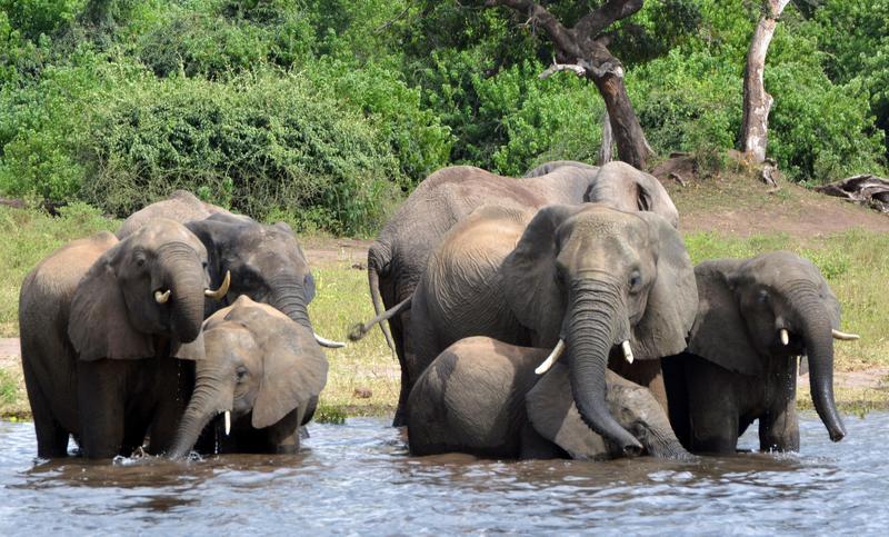 elephant-AP.jpg