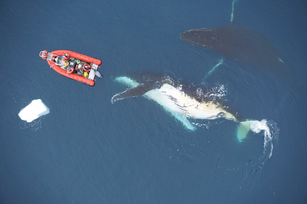 Science Says: Diet plays big role in how huge whales can get