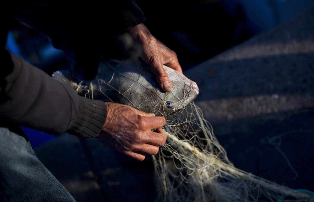 EU claims better fishing rules; environmentalists disagree