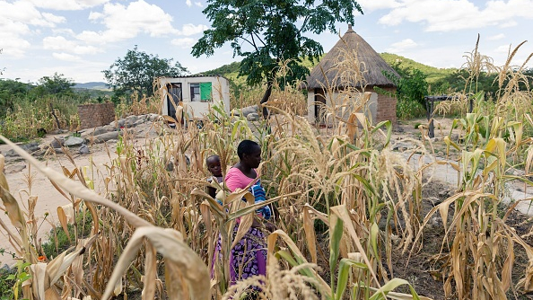 Zimbabwe to spend $133 million on maize subsidies after drought
