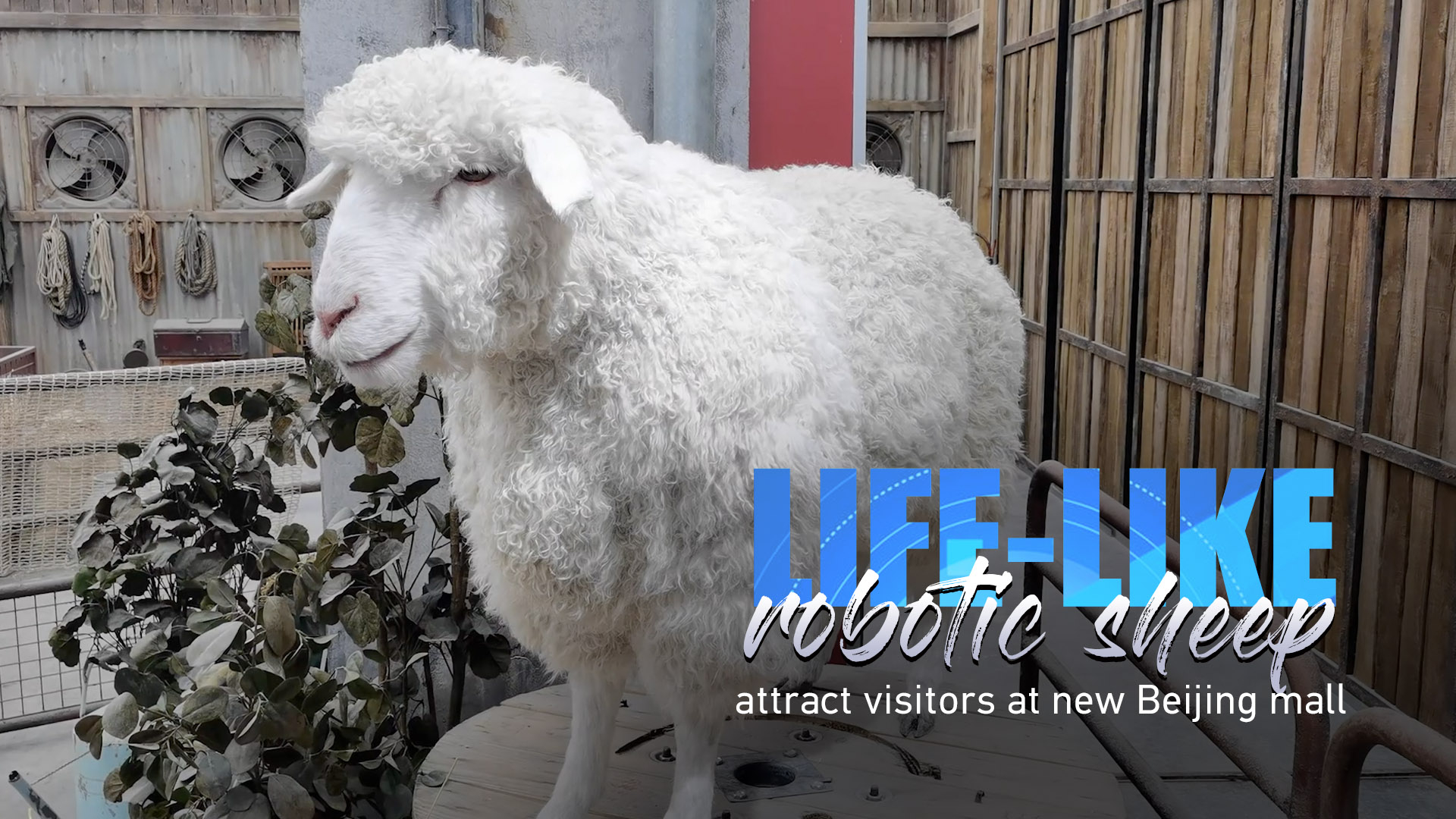Life-like robotic sheep attract visitors at new Beijing mall