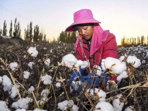 China's cotton output slightly drops in 2019