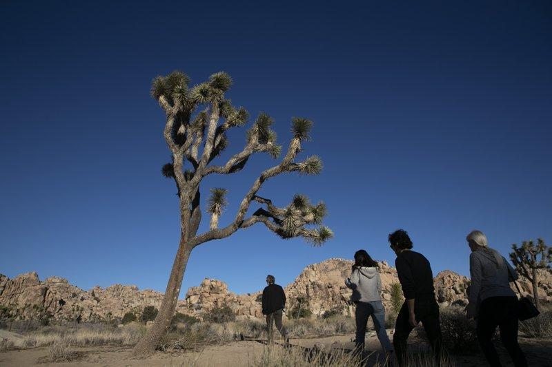 Joshua Tree National Park braces for crowds amid holidays