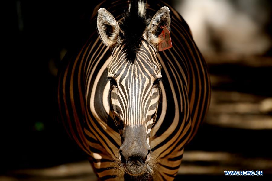 Animals at Zoological Gardens in Yangon, Myanmar