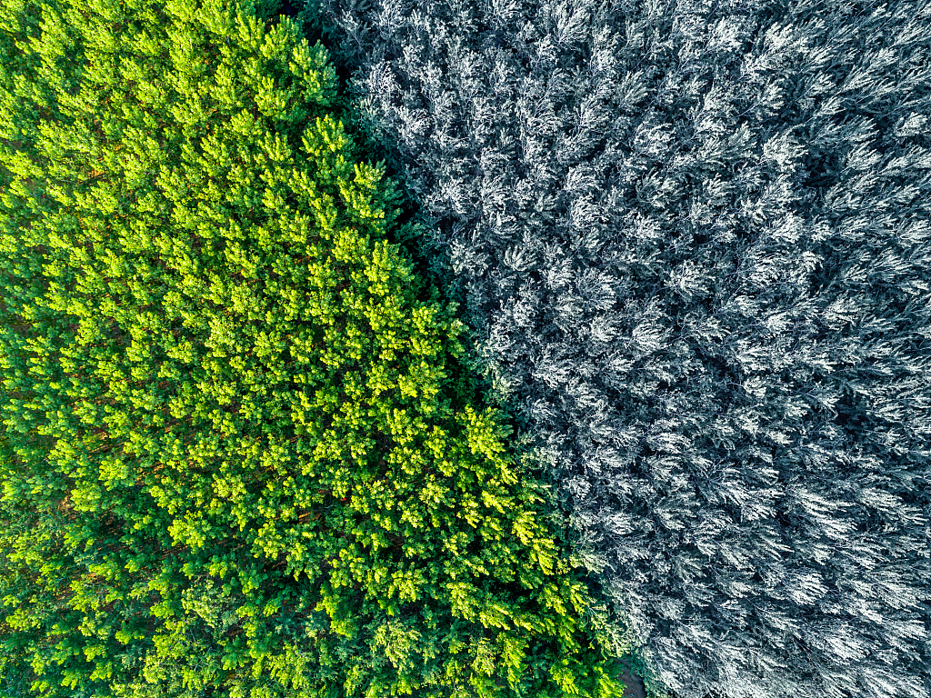 Scientists may have found world's oldest forest
