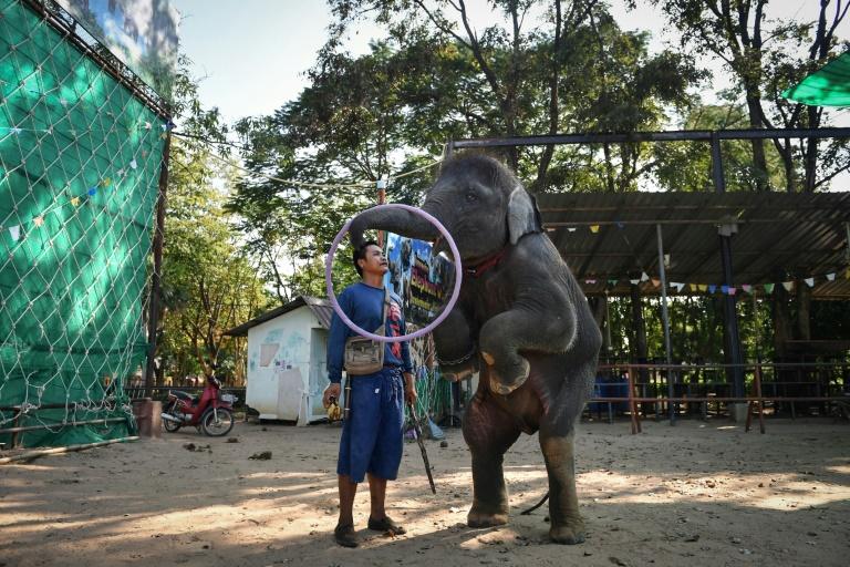 dancing elephant (afp).jpg