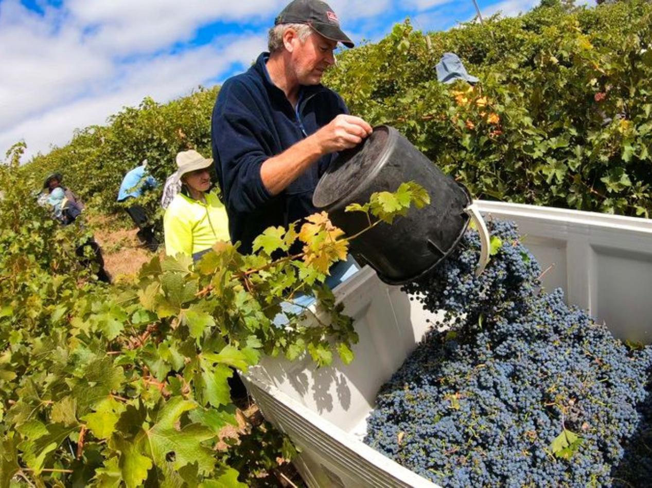 South Australian wine production devastated by bushfires